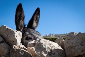 AlexGroundwater donkey