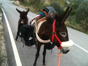 brotherlapin donkey